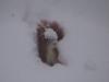 Eichhörnchen 25.12.2010 10:44