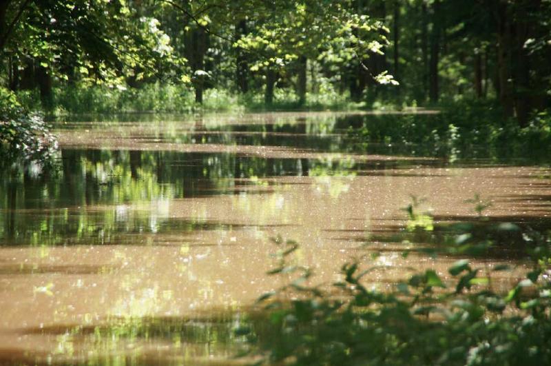 hochwasserjuni2013-9