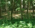 hochwasserjuni2013-13
