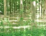 hochwasserjuni2013-15