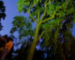lichterfest_karlsruhe_stadtgarten_zoo_201348-jpg