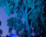 lichterfest_karlsruhe_stadtgarten_zoo_201349-jpg