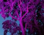 lichterfest_karlsruhe_stadtgarten_zoo_201350-jpg