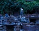 lichterfest_karlsruhe_stadtgarten_zoo_201365-jpg