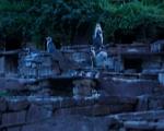lichterfest_karlsruhe_stadtgarten_zoo_201366-jpg