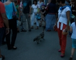 lichterfest_karlsruhe_stadtgarten_zoo_201367-jpg