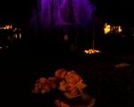 lichterfest_karlsruhe_stadtgarten_zoo_20137-jpg