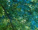 lichterfest_karlsruhe_stadtgarten_zoo_201385-jpg