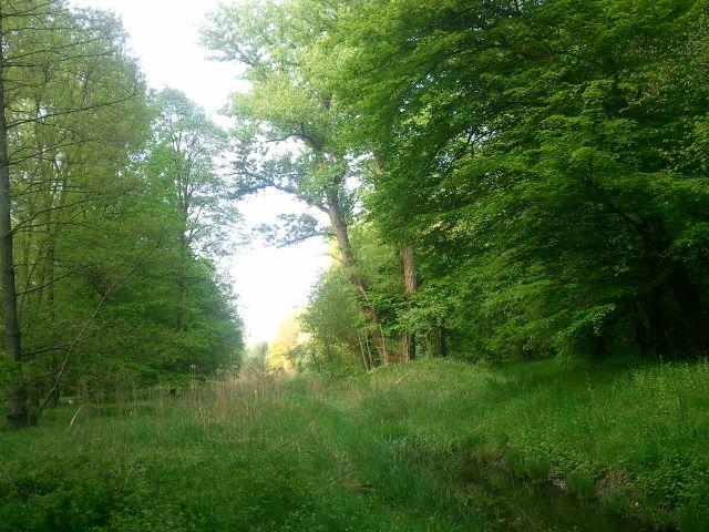 Bach durch den Oberwald