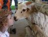zoo_karlsruhe_zoo_brand_nov_17-13