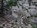 tierwelten_Zoo_1_1_2017--30