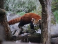tierwelten_Zoo_1_1_2017--45