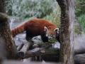 tierwelten_Zoo_1_1_2017--46