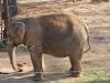 Zufriedene Elefanten.