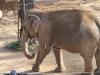 Zufriedene Elefanten. Rettung in letzer Minute.