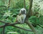 zoo_besuch_16juni2013-103