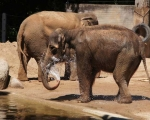 zoo_besuch_16juni2013-109