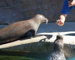 zoo_besuch_16juni2013-11