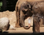 zoo_besuch_16juni2013-110