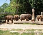 zoo_besuch_16juni2013-111