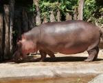 zoo_besuch_16juni2013-113