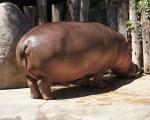 zoo_besuch_16juni2013-118