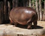 zoo_besuch_16juni2013-120