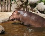 zoo_besuch_16juni2013-123