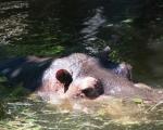 zoo_besuch_16juni2013-129