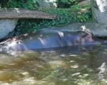 zoo_besuch_16juni2013-130