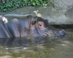 zoo_besuch_16juni2013-131