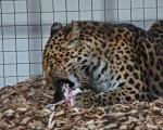 zoo_besuch_16juni2013-3