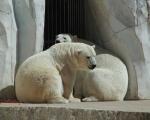 zoo_besuch_16juni2013-30