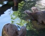 zoo_besuch_16juni2013-35