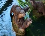 zoo_besuch_16juni2013-36-5