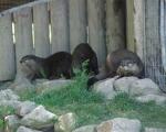 zoo_besuch_16juni2013-43