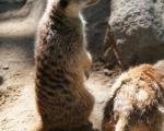 zoo_besuch_16juni2013-46