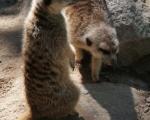 zoo_besuch_16juni2013-47