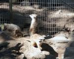 zoo_besuch_16juni2013-49