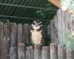 zoo_besuch_16juni2013-55