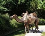 zoo_besuch_16juni2013-6