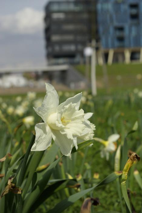 Frühling in der Südstadt